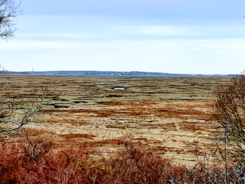 A panoramic photo of Cape Cod's Great Marsh