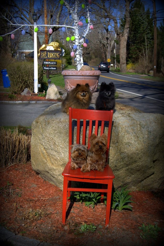Photo of red chair set against a large stone with 2 dogs on stone and 2 dogs on red chair