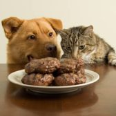 Dog and cat staring at a dish of burgers patties.