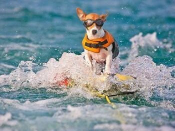 Dog skiing with life preserver on