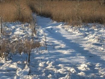 Photo of sand with path leading through tall grass
