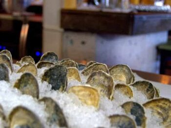 Photo of clams in ice
