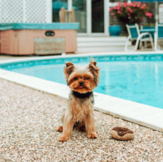 The inns small yorkie poses by the pool