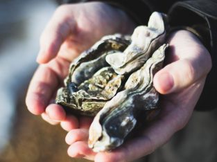 Someone holds an oyster open in their hands
